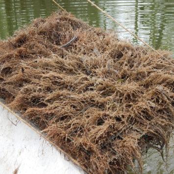 Kontrola hniezd na ramene Horný Čepeň 2014