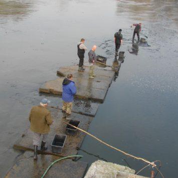 Vylovili sme chovný rybník Hlohovník