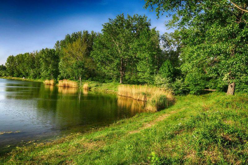 Bagrovisko Šintava – príprava na preteky